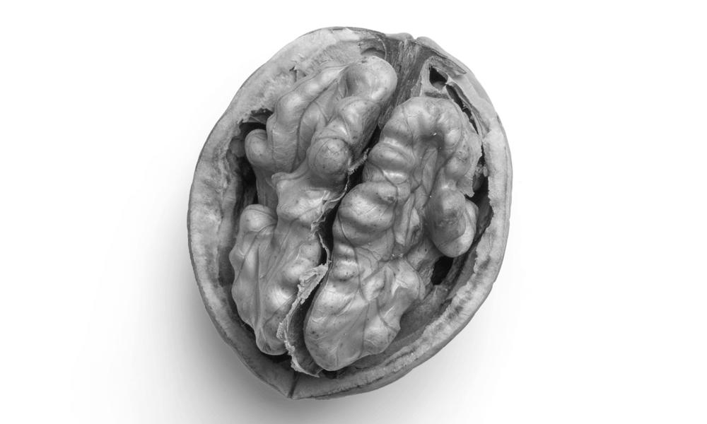 Brainfood und Powersnacks